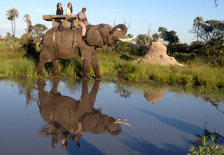 So happy to finally fulfill my dream of riding an elephant in Africa!!! <3 <3 <3 Botswana has the largest population of elephants in the continent and Abu Camp in particular specializes on the elephant interaction. We are riding Kathy, who is about 50 years old. <3