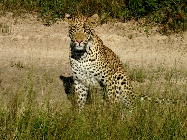 What a beauty! Taken with a point-and-shoot, and hardly any zoom at the Okavango Delta
